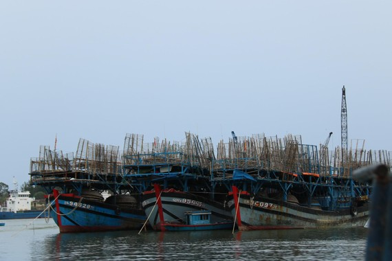 Tam Hải là nơi có nhiều ngư dân hành nghề câu mực trên biển