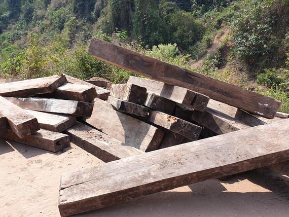 Một phần gỗ mun lậu đã được lực lượng chức năng đánh số