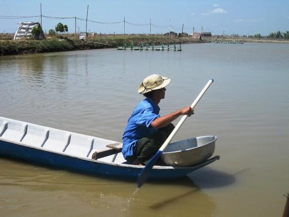 Nông dân Trà Vinh theo dõi tình hình các ao nuôi tôm để có phương án phòng, trị bệnh