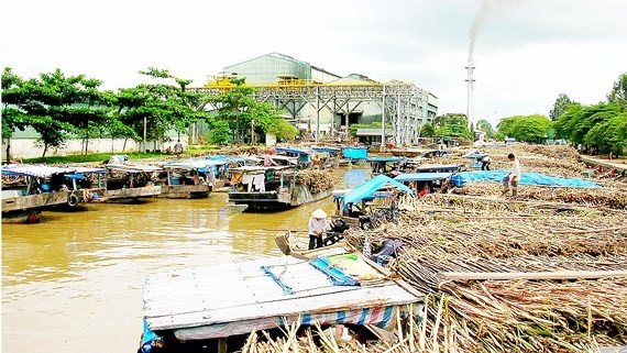 The sugar industry needs restructuring. (Photo: SGGP)