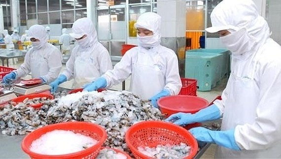Workers process shrimps for export at a seafood company. (Photo: SGGP)