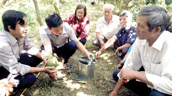 Kỹ sư Tập đoàn Lộc Trời hướng dẫn nông dân cách nhận biết sâu bệnh trên trái