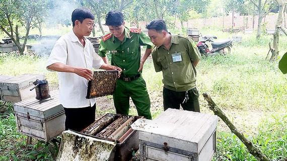 Anh Vũ Ngọc Cường với đàn ong của mình
