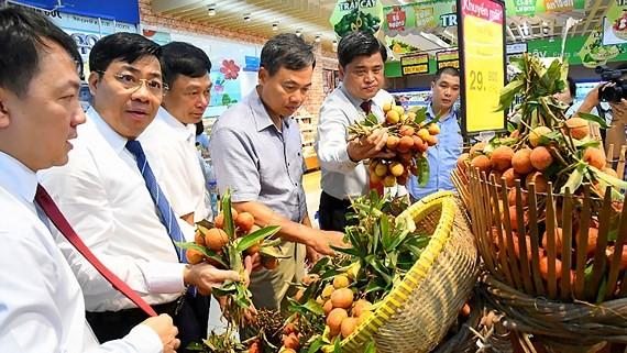 Đại diện Saigon Co.op hỗ trợ thu mua vải thiều tại tỉnh Bắc Giang và Hải Dương