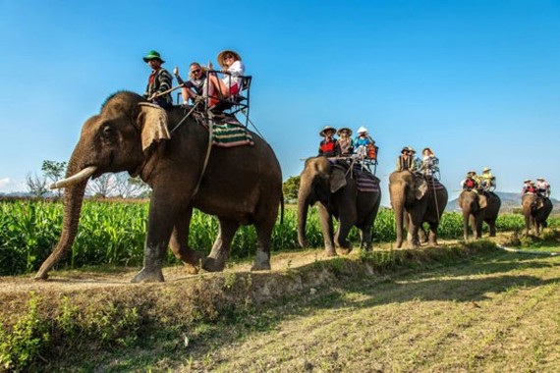 """Elephant riding"" by Nguyen Huy Son"