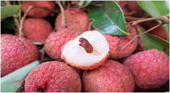 Fresh litchi, which is in season now in northern Vietnam, is being served on Vietnam Airlines' international and domestic flights departing from Hanoi. (Photo: cafef.vn)