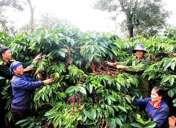 Coffee price falls 14.2 percent.