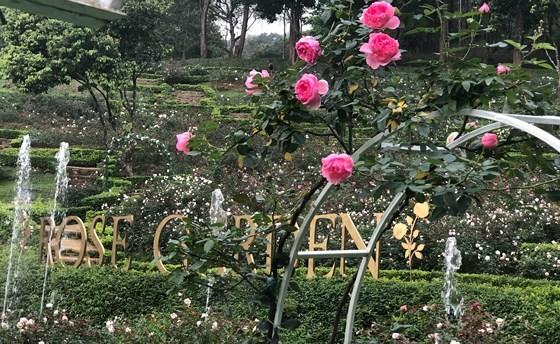 Paragon Resort Bavi recognized for largest rose garden
