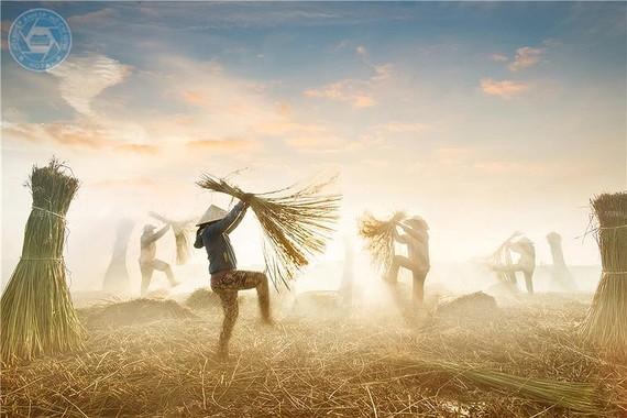 Vu dieu coi (The melody of sedge) by Photographer Nguyen Ngoc Hoa