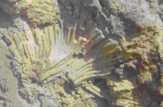 Hóa thạch san hô cổ ở xã Lang Môn