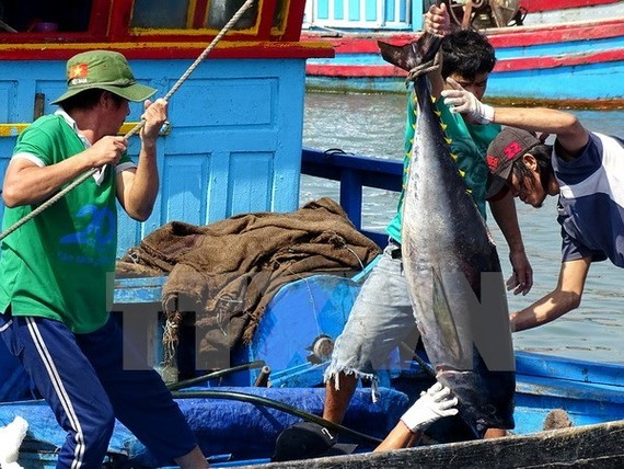 Vietnam's tuna export earnings gained a year-on-year increase of 20 percent to US$ 216 million in the first five months (Source: VNA)