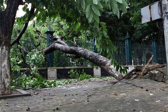 Storm Talas uproots many trees in Vinh City, Nghe An province (Photo: VNA)