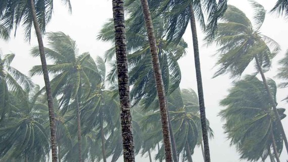 New tropical –low pressure system has just appeared in the East Sea.