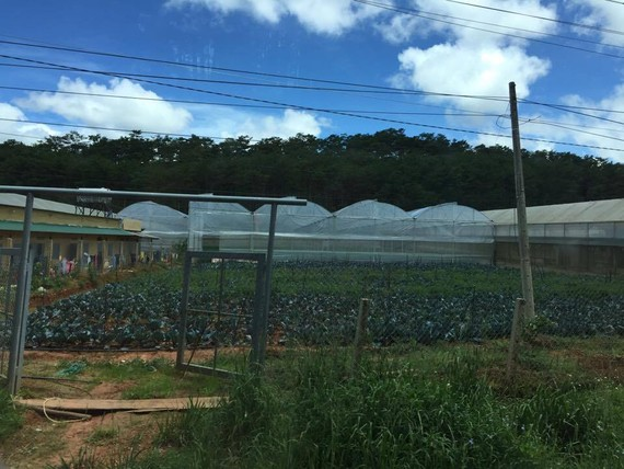 The application of high technology in agriculture, especially in planting vegetables and flowers, has been increasing in Da Lat.  (Photo: KK)