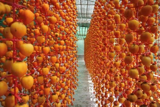 Season of dried persimmon production in Da Lat