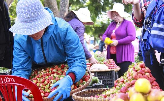 Đến chợ Đà Lạt những ngày này du khách khó cưỡng lại sức hút của những rổ dâu tây vừa mới hái từ vườn, lá trên cuốn vẫn còn tươi xanh.