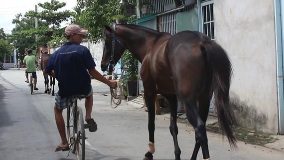 Những chú ngựa đua cuối cùng và giấc mơ hảo mã lại tung vó trường đua.