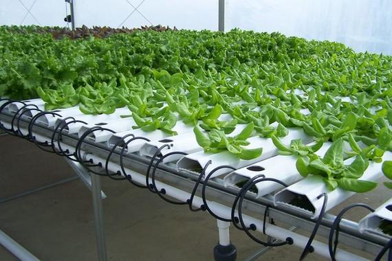 Số hóa thực phẩm an toàn