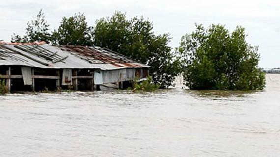 Năm nay, lũ ĐBSCL có khả năng về sớm. Trong ảnh: Nhà dân bị ngập ở vùng lũ giáp biên giới An Giang. Ảnh: T.L