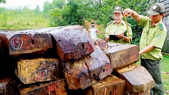 Kiểm lâm phát hiện hàng trăm phách gỗ khai thác trái phép
