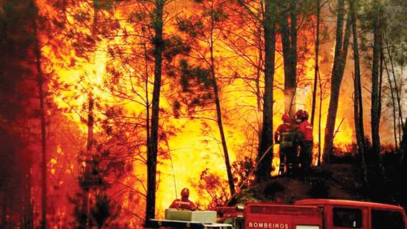 Lính cứu hỏa Bồ Đào Nha nỗ lực dập lửa trong vụ cháy rừng