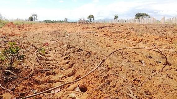 """Nhiều vạt rừng """"biến mất"""", đất đã được san phẳng. Ảnh: NGUYỄN TIẾN"""