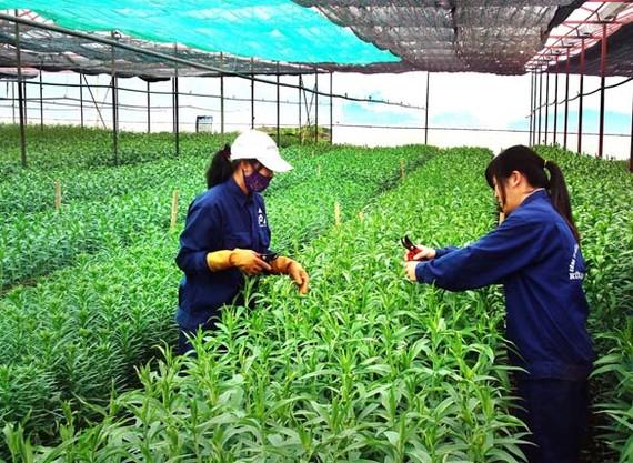Nhật Bản hỗ trợ dự án phát triển nông nghiệp hữu cơ tại tỉnh Bến Tre
