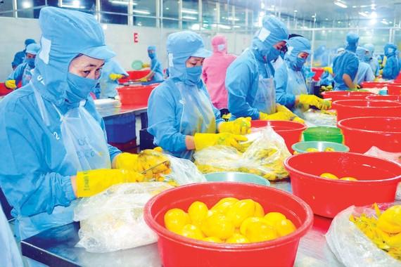 Xoài cát Hòa Lộc đông lạnh, mặt hàng xuất khẩu chiến lược của Tiền Giang