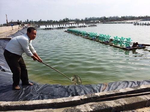 Năm 2025 cả nước có 7.000ha nuôi tôm trên cát