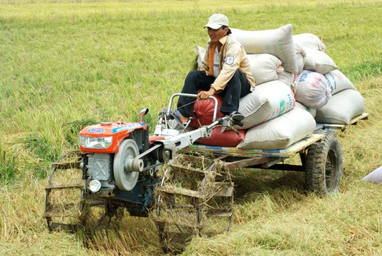 Sản xuất lúa trên cánh đồng mẫu lớn ở ĐBSCL