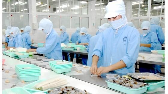 Chế biến tôm xuất khẩu tại Công ty Cholimex.
