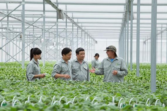 Tăng cường liên kết nhà nông và doanh nghiệp