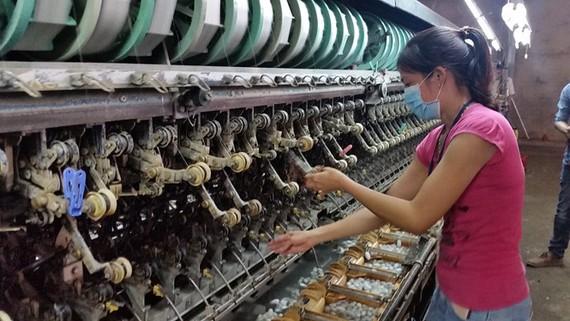 Nhà máy ươm tơ tự động của Công ty Đông Lâm