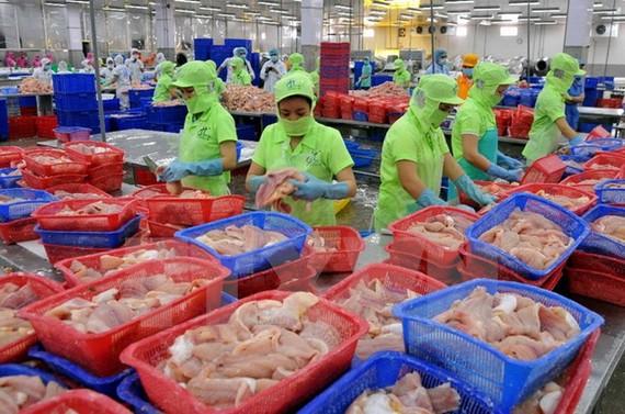 Chế biến cá tra xuất khẩu tại Công ty Hùng Cá, TP. Cao Lãnh, tỉnh Đồng Tháp.