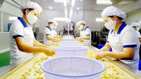 Chế biến hạt điều xuất khẩu