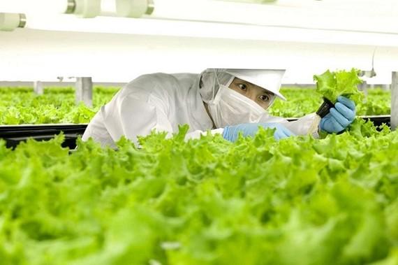 Nhiều doanh nghiệp đang gặp khó khăn với thủ tục thế chấp tài sản trên đất nông nghiệp.