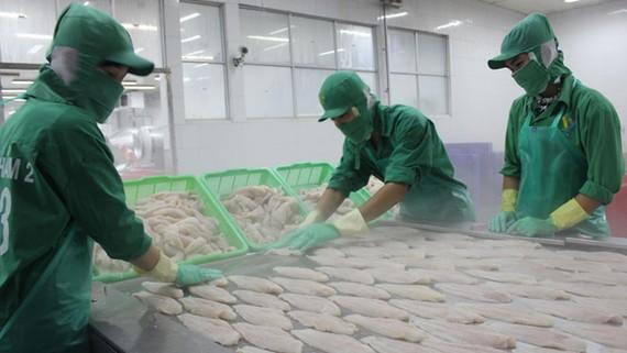 Chính sách phân biệt của Mỹ có thể tạo ra thách thức đối với cá tra Việt Nam