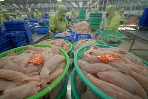 Do tự cạnh tranh nhau, ngành cá tra đang mất dần thị trường Mỹ, châu Âu Ảnh: Ngọc Trinh