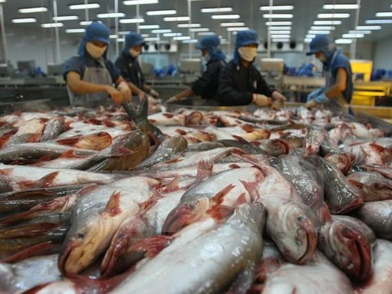 Chế biến cá tra xuất khẩu tại Công ty thuỷ sản Bình An, thành phố Cần Thơ. (Ảnh: Huy Hùng/TTXVN)
