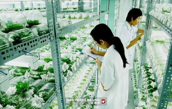 TPHCM: Giá trị sản xuất nông nghiệp đạt hơn 8.500 tỷ đồng
