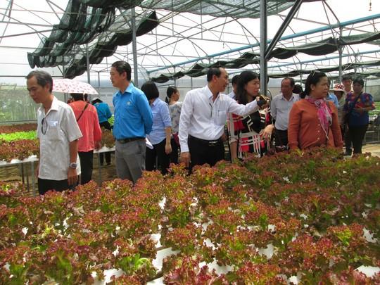 Khách thăm một vườn rau thủy canh đạt chuẩn GlobalGAP tại huyện Củ Chi (TP HCM) Ảnh: Ngọc Ánh