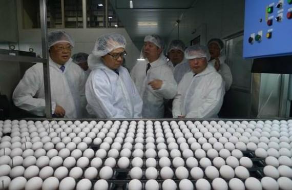Tập đoàn Nhật Bản đưa công nghệ xử lý trứng siêu sạch vào Việt Nam
