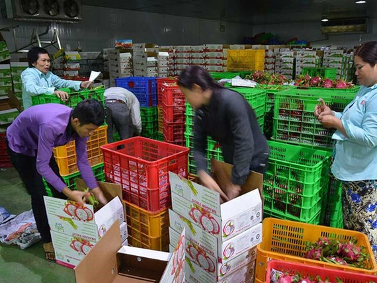 Nhu cầu sản phẩm chất lượng cao, chế biến sâu, giá trị gia tăng của TQ là rất lớn. Trong ảnh: Đóng gói trái cây để xuất khẩu sang TQ tại một DN VN. Ảnh: QUANG HUY