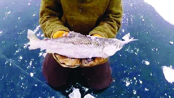Cá lớn bị đóng băng khi đang nuốt cá bé