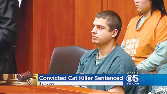 Bị 16 năm tù vì giết 21 con mèo