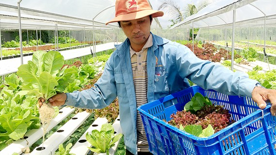 Nông dân Việt Nam đang áp dụng mô hình trồng trên giá thể