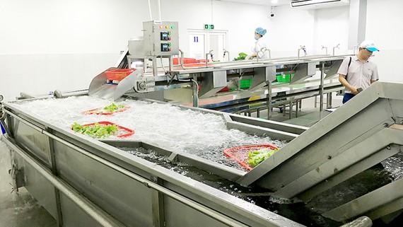 Hệ thống máy rửa rau theo công nghệ nước ngoài  của nông dân TPHCM