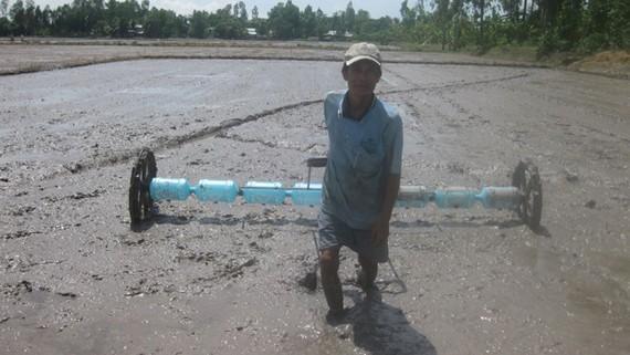 Vụ đông xuân 2017-2018, tỉnh Đồng Tháp sản xuất 60%  diện tích là lúa chất lượng cao, phục vụ xuất khẩu