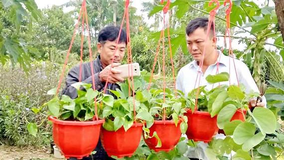 Anh Nguyễn Hữu Hóa (bên phải) tra cứu những thông tin từ mạng internet để tìm kiếm đầu ra cho hoa, cây cảnh của mình