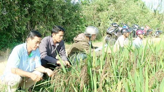 HTX Dịch vụ nông nghiệp Tân Cường (xã Phú Cường, huyện Tam Nông, tỉnh Đồng Tháp) có vùng                    lúa nguyên liệu áp dụng quy trình sản xuất an toàn         Ảnh: TRẦN TRỌNG TRUNG